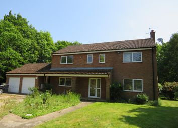 Thumbnail 4 bed detached house to rent in Undley, Lakenheath, Brandon
