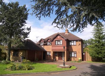 Thumbnail 4 bed detached house to rent in The Pines, Twyford, Reading, Berkshire
