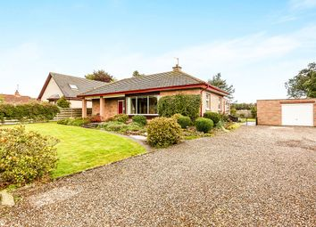 Thumbnail 4 bed bungalow for sale in Coronation Avenue, Montrose