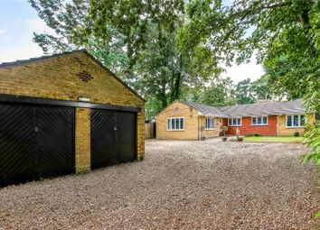 Thumbnail 4 bed detached bungalow for sale in Kiln Ride, Finchampstead, Wokingham, Berkshire