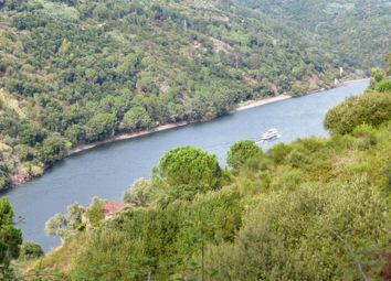 Thumbnail Land for sale in P537, Land With 3 Houses By The Douro River, Portugal