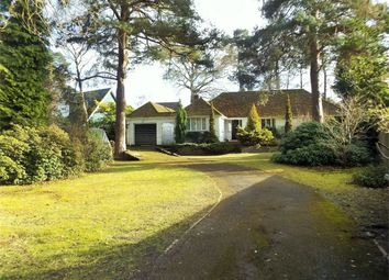 Thumbnail 4 bed detached bungalow to rent in Curley Hill Road, Lightwater, Surrey