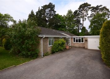 Thumbnail 4 bedroom bungalow for sale in Copped Hall Drive, Camberley, Surrey