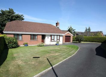 Thumbnail 3 bed detached bungalow to rent in Clanwilliams Court, Ballynahinch, Down