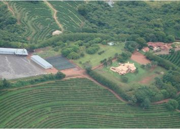 Thumbnail Farm for sale in Brejo Alegre, Brazil