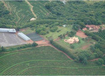 Thumbnail Farm for sale in Brejo, Alegre, Brazil