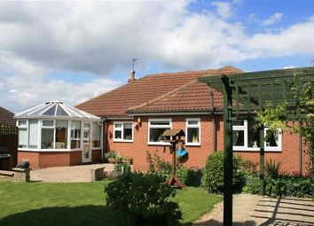 Thumbnail 3 bed detached bungalow to rent in Lodge Lane, Upton
