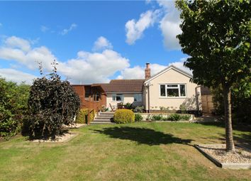 Thumbnail 4 bed detached bungalow for sale in Beavor Lane, Axminster, Devon