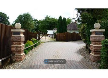 Thumbnail 4 bed bungalow to rent in Windrush Road, Kesgrave