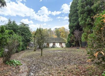 Thumbnail 5 bedroom bungalow for sale in Westwood Road, Windlesham