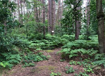Land for sale in Old Guildford Road, Frimley Green, Surrey GU16