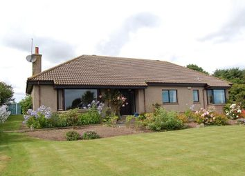 Thumbnail 4 bed bungalow to rent in Kingston, Pitmillan, Newburgh, Aberdeenshire