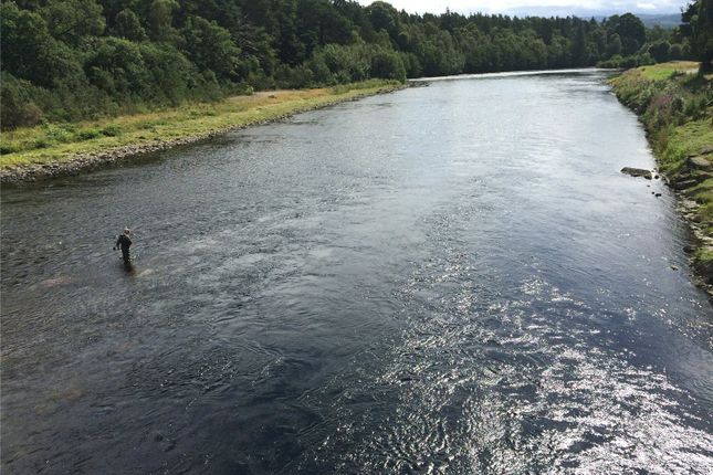 Picture No. 03 of Week 12 Lower Beauly Fishings, Lower Beauly, Beauly IV4
