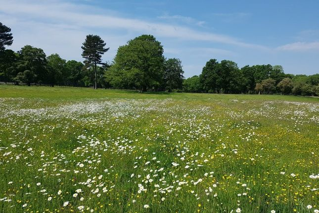 Thumbnail Land for sale in Chobham Road, Knaphill, Woking