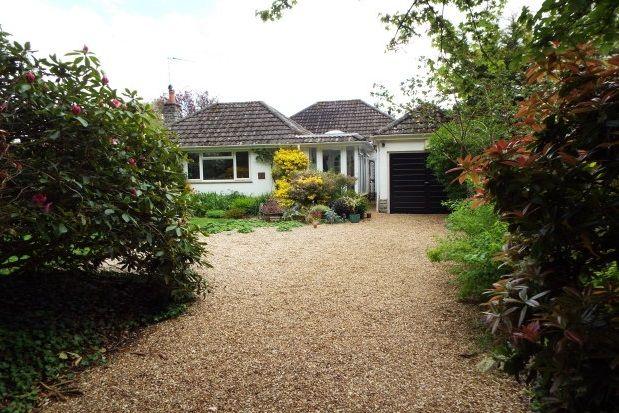 Thumbnail Bungalow to rent in Honey Lane, Burley, Ringwood