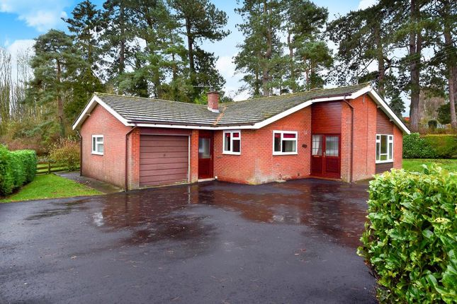 Thumbnail Detached bungalow to rent in Kingswood Road, Kington