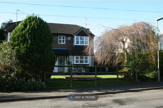 Thumbnail Semi-detached house to rent in Forest Road, Liss