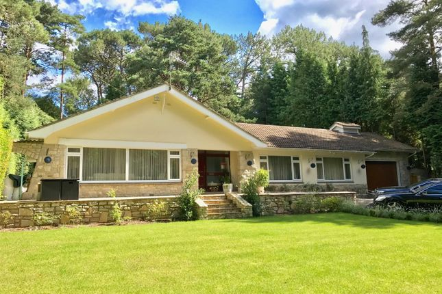 Thumbnail Detached bungalow for sale in Bury Road, Branksome Park, Poole
