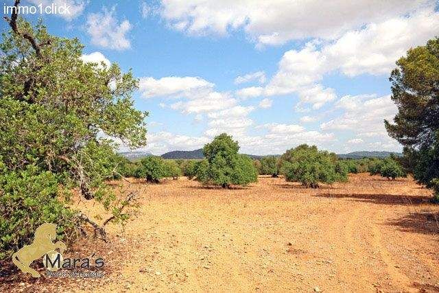 Thumbnail Property for sale in Campos, Campos, Spain