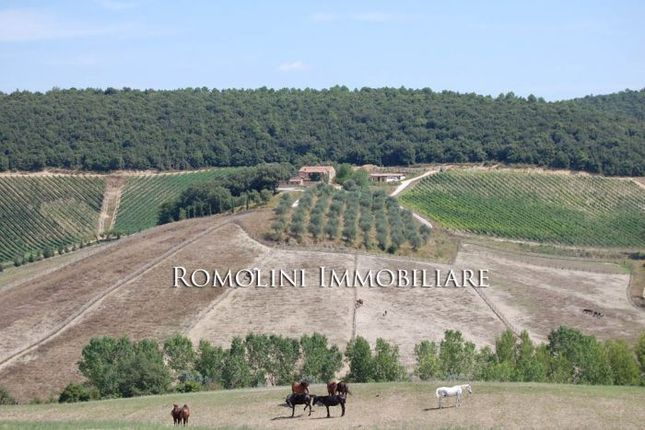 8 bed equestrian property for sale in Siena, Tuscany, Italy
