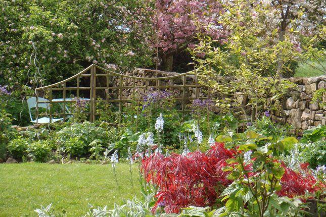 Mature Cottage Garden