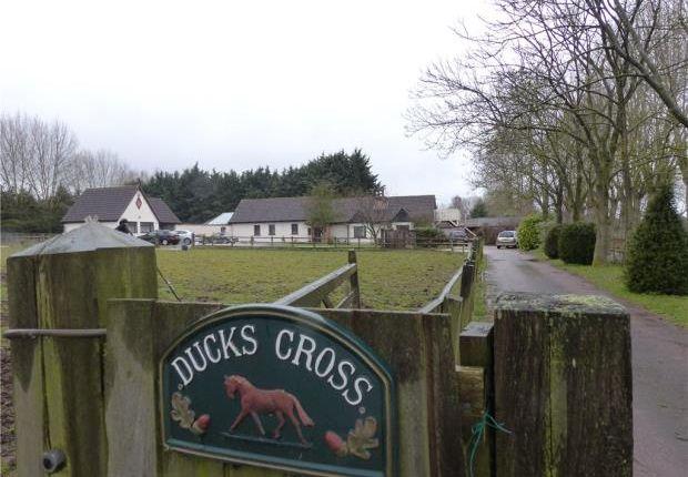 Thumbnail Semi-detached bungalow to rent in Ducks Cross Farm, Colesden Road, Wilden