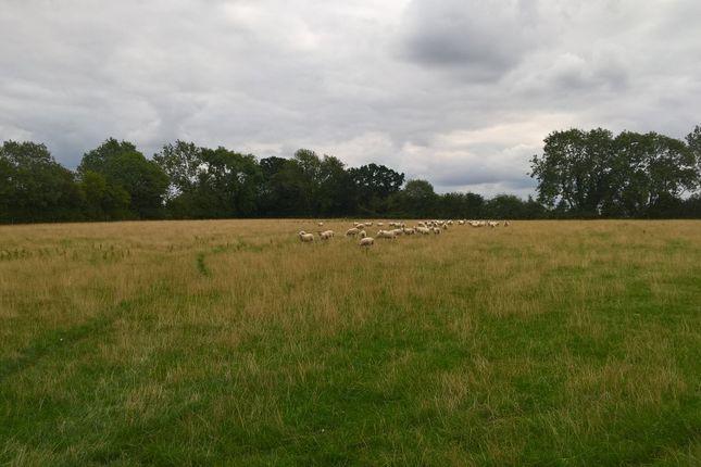 Thumbnail Farm for sale in Broad Road, Alburgh, Harleston