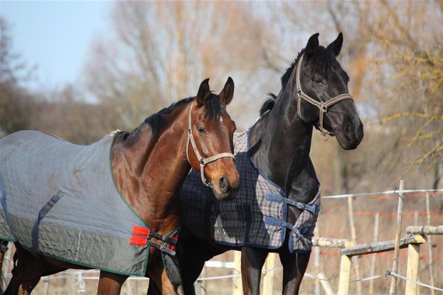 Commercial property for sale in Equine And Canine Laundry Provider WR5, Norton, Worcestershire