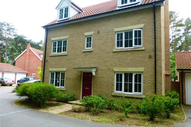 Thumbnail Detached house to rent in Heathland Way, Mildenhall, Bury St. Edmunds