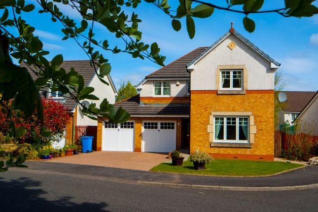 Thumbnail Detached house for sale in Souter Way, Larbert