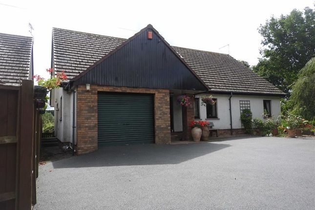 Thumbnail Detached bungalow for sale in Llechryd, Cardigan