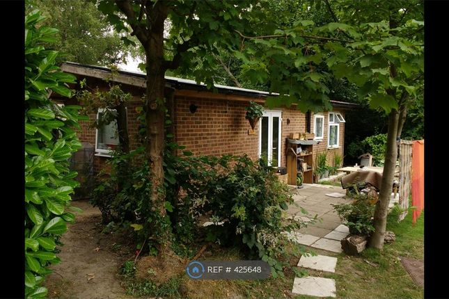 Thumbnail Bungalow to rent in Laurel Grove, Farnham
