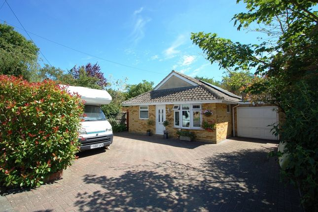 Thumbnail Detached bungalow for sale in Totham Hill Green, Great Totham, Maldon