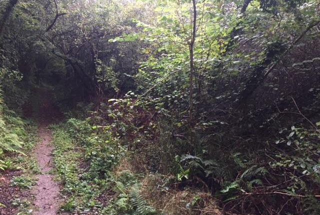 Img_2888 of North Buckland, Braunton EX33