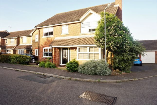 Thumbnail Detached house for sale in Hayrick Close, Basildon
