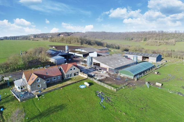 Thumbnail Farm for sale in Oswaldkirk Road, Gilling East, York