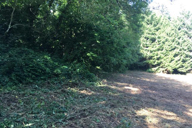 Img_0525 of Wood Lane, Combe Martin, Ilfracombe EX34