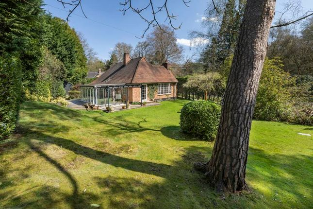 Thumbnail Detached bungalow to rent in Wentworth, Virginia Water, Surrey
