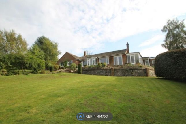 Thumbnail Bungalow to rent in Woodhouse Lane, Holmbury St Mary