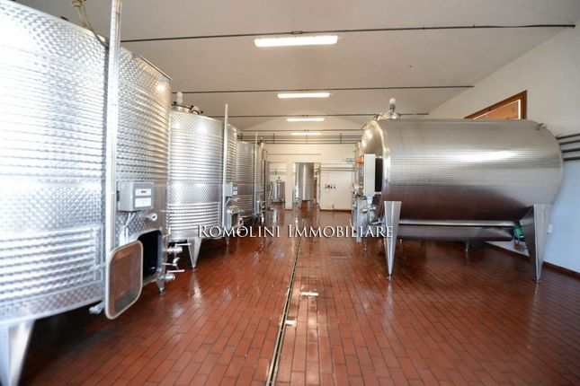 Wine Estate For Sale In Siena, Organic Wine And Oil