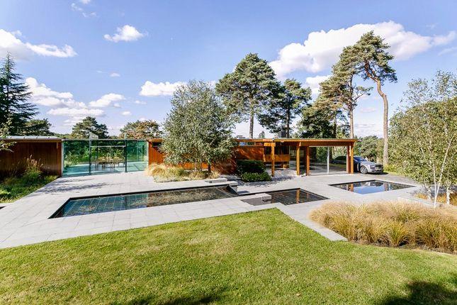 Thumbnail Detached bungalow for sale in Westwood Road, Windlesham, Surrey