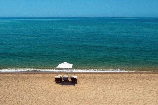 Beachfront_Umbrellas