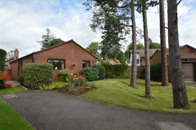 Thumbnail Bungalow for sale in Pinewood Walk, Strathaven