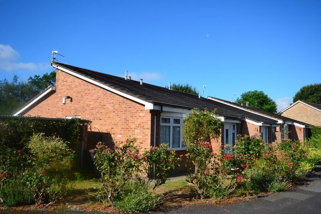 Thumbnail Semi-detached bungalow to rent in Brook Gardens, Emsworth