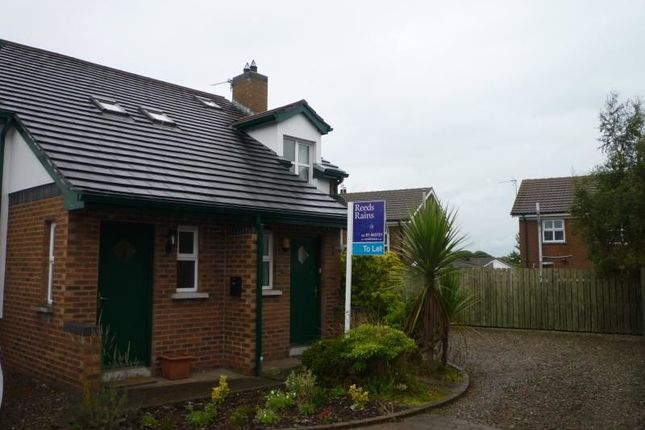 Thumbnail Semi-detached house to rent in Hillside Gardens, Bangor