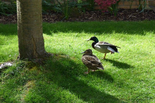 Local Visitors of Orchard Close, Winterbourne, Bristol BS36