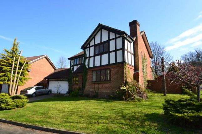 Thumbnail Detached house to rent in Grey Alders, Banstead