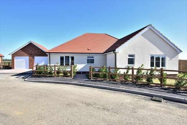 Thumbnail Detached bungalow for sale in Aingers Green Road, Great Bentley, Colchester