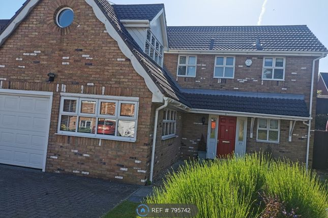 Thumbnail Detached house to rent in Roger Beck Way, Sketty, Swansea