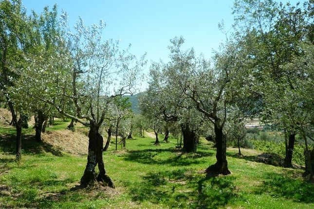 P1140120 of Villa San Michele, Cortona, Tuscany